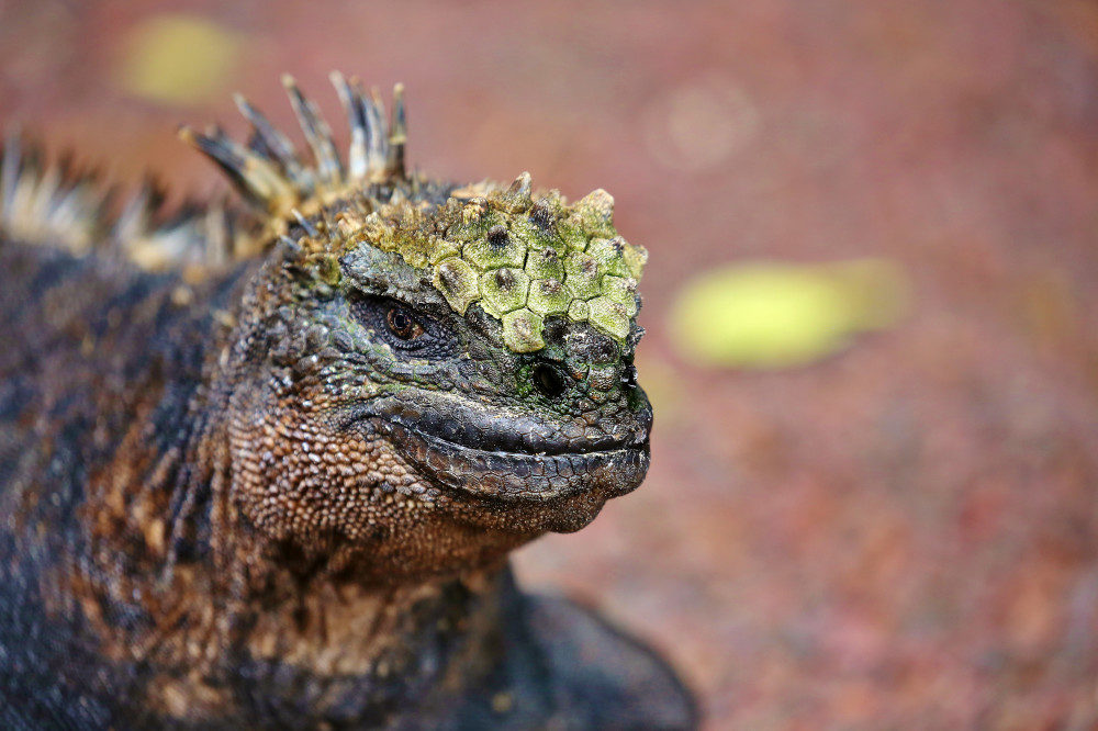 galapagos tiere
